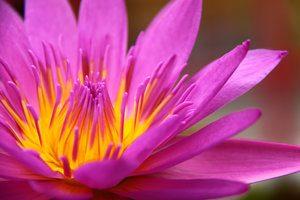 free spiritual retreat